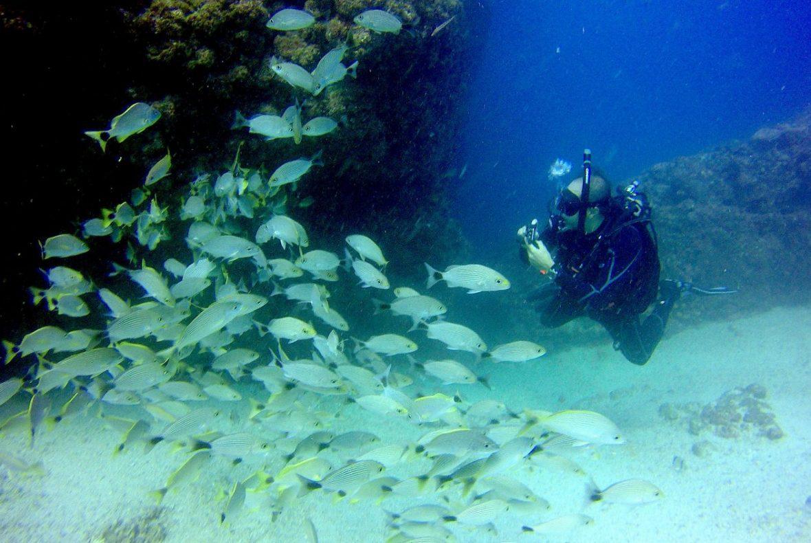 Scuba Dive Los Arcos from Puerto Vallarta.