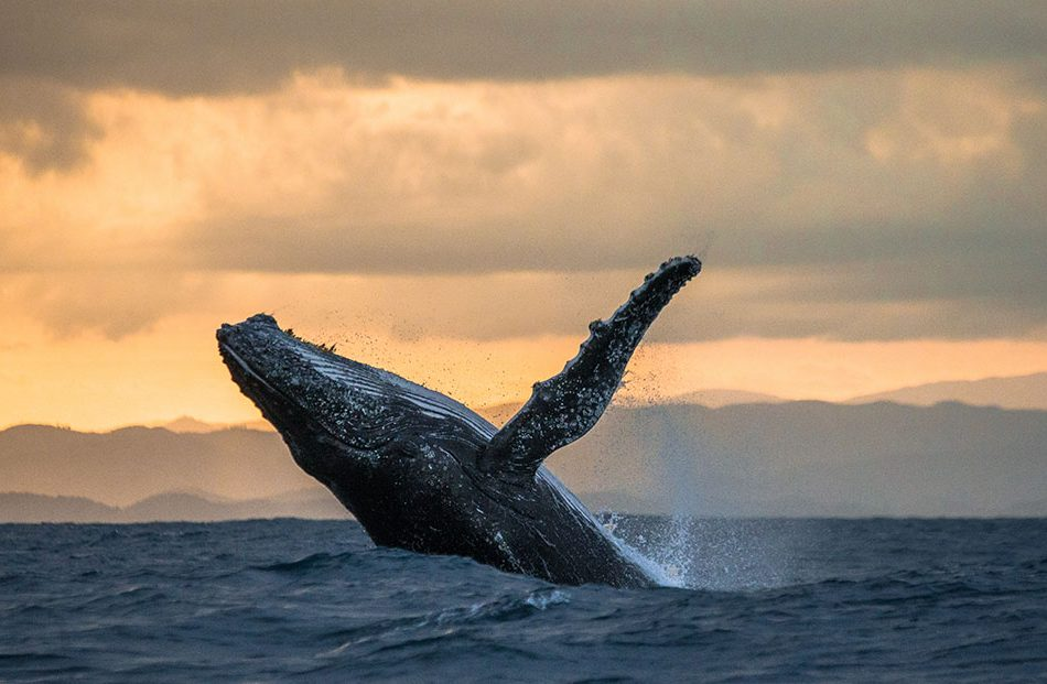 whale-season-about-to-begin