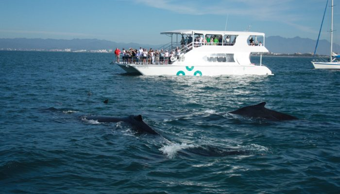 Catamaran Whale Watching Vallarta