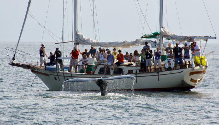 Whale Watching Tour Puerto Vallarta