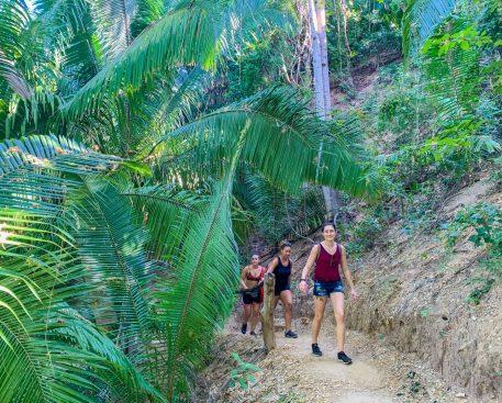 Lush Jungle on the hike in Puerto Vallarta